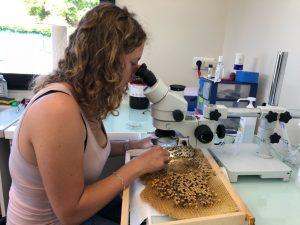 Gabrielle Almecija - Recherche Résitance Varroa