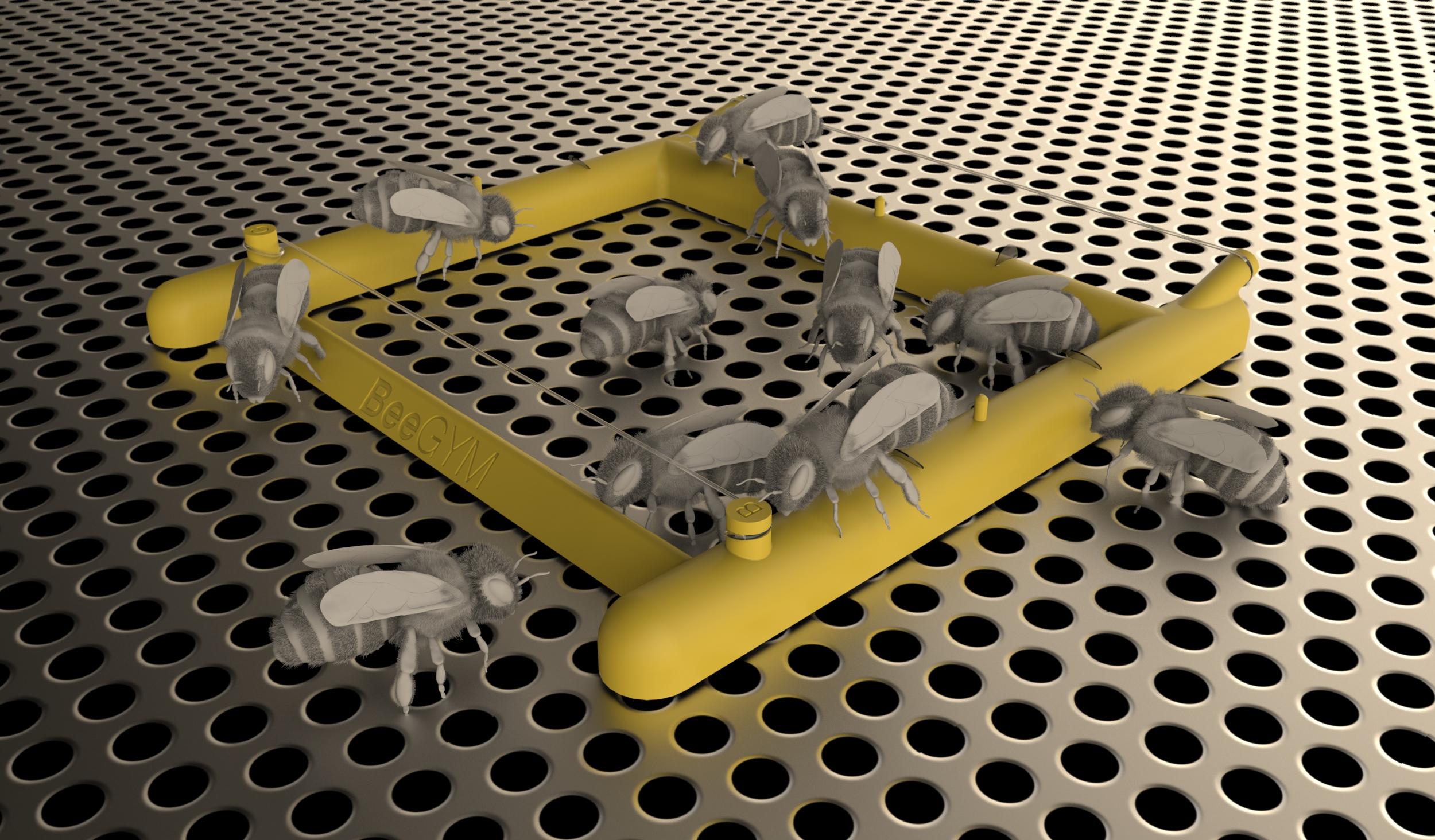 Bee Gym Chemical Free Varroa Grooming Aid Vita Health Beehive Phone Wiring Diagram Mockup Of Bees Using As