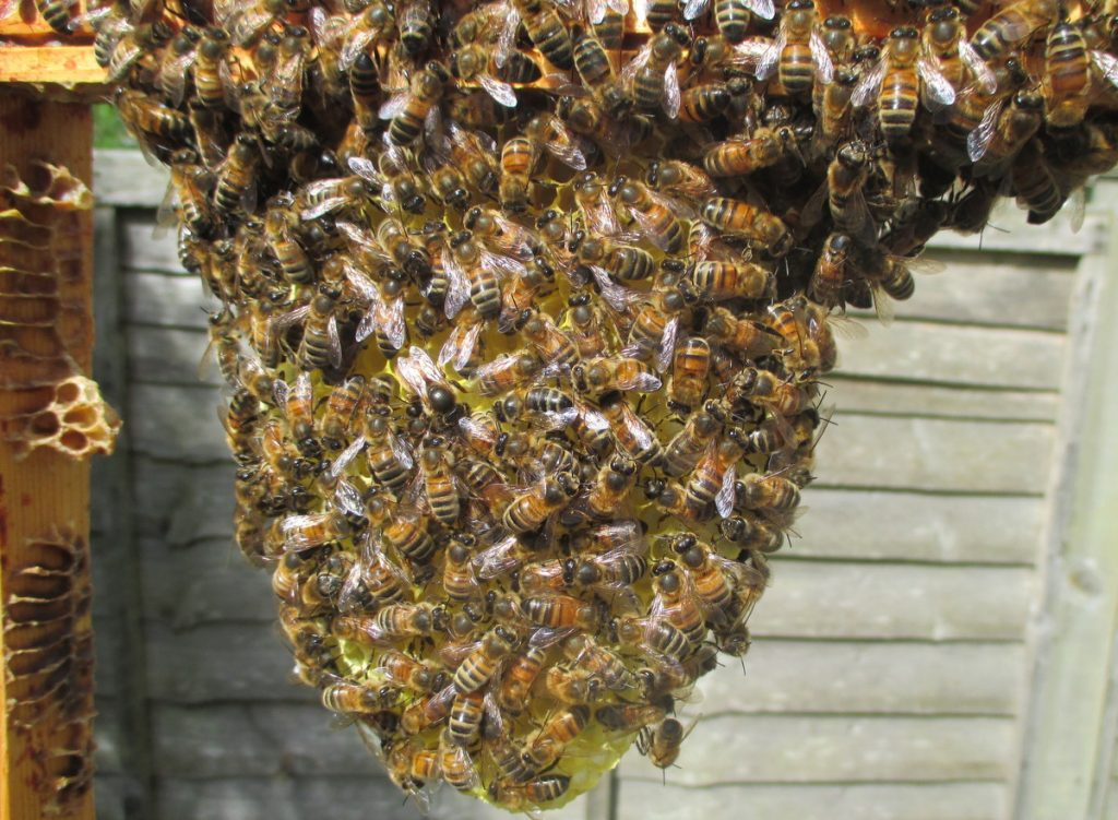 The new queen's thorax is visible just left of centre in the middle of the photo.