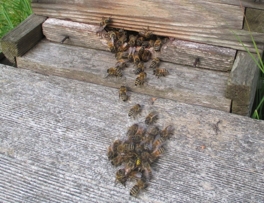 Two lines of wasp defence