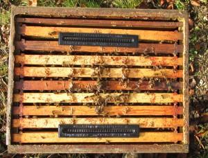 Control del Pequeño Escarabajo de la Colmena con el Beetle Blaster
