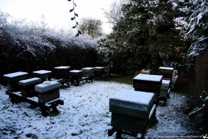 apiary in winter