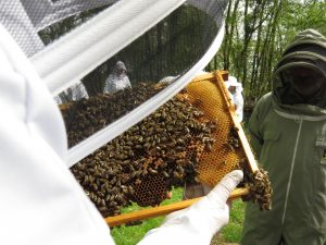 Inspecting the hives at a community apiary