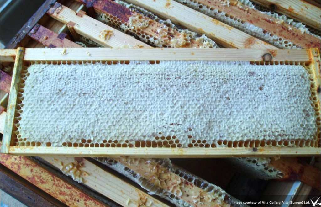 a frame of sealed honey from the super